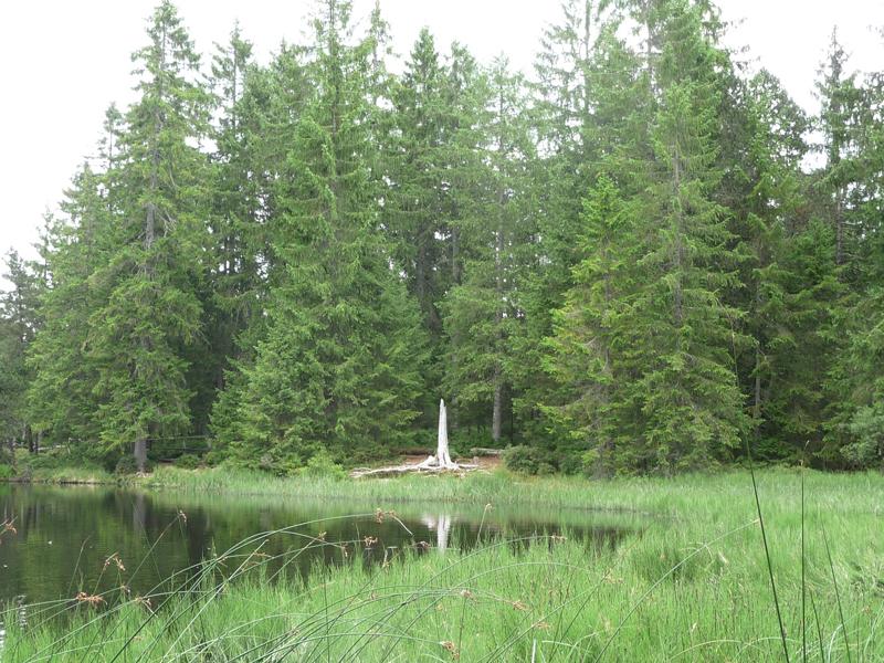 Moorsee im Jura