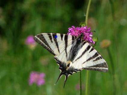Naturgarten gestalten Schmetterling auf Blume