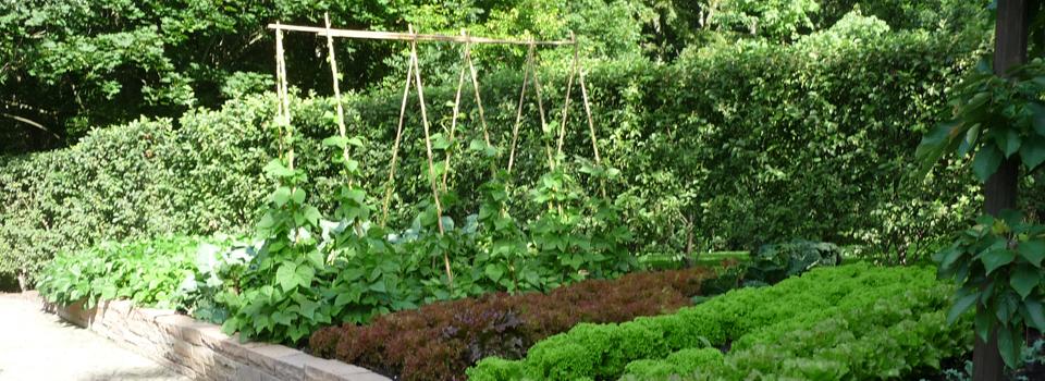 Gemüsegarten mit Salat und Stangenbohnen