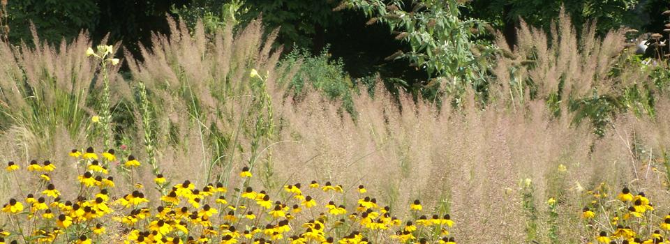 Sonnenhut mit Gräsern, Sinnesgarten in einem Firmengarten in Schwerin