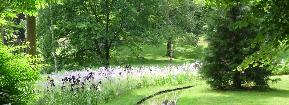 Irisbeet entlang eines Baches im Kurpark von Bad Nauheim