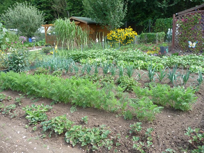 Gemüsebeet mit unterschiedlichen Gemüsen