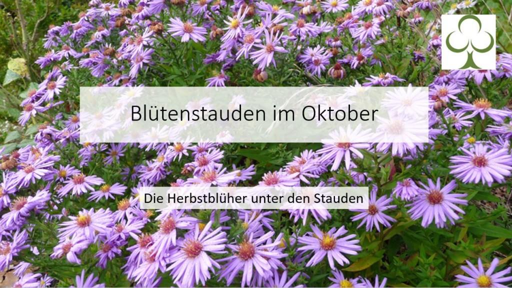 Blütenstauden im Oktober