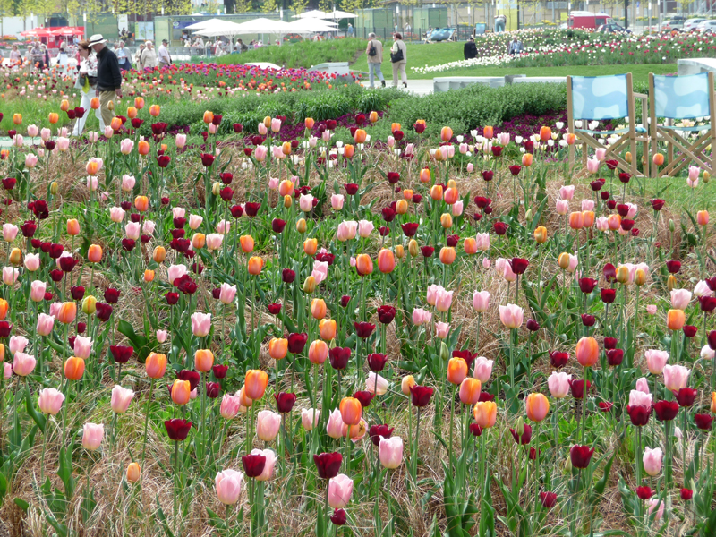 Bepflanzung pastellfarbene Tulpen