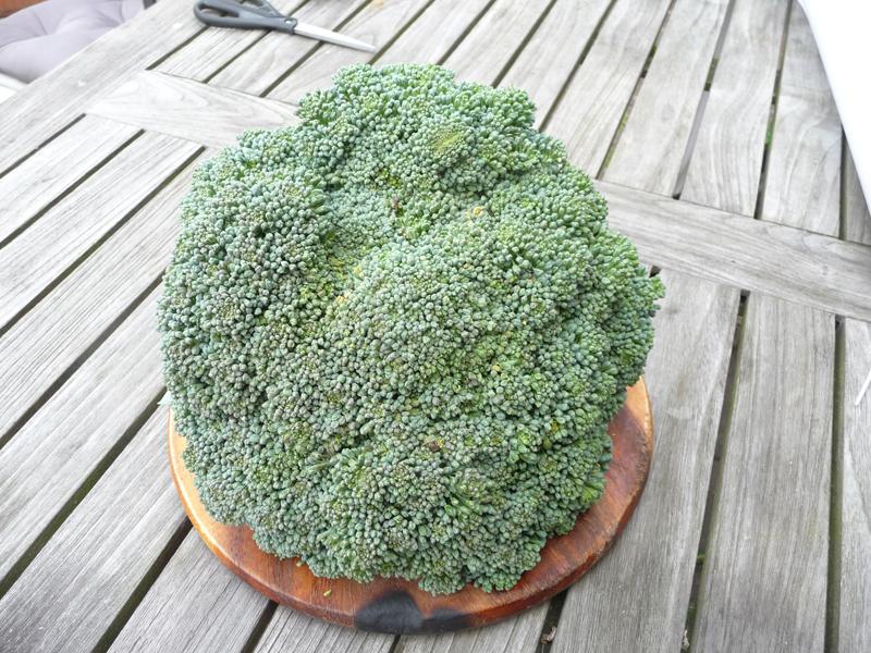 Brokkoli für Brokkolisalat