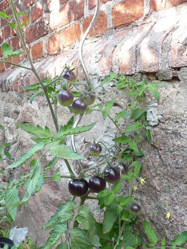 Aktivierungsangebot mit Gartenfragen