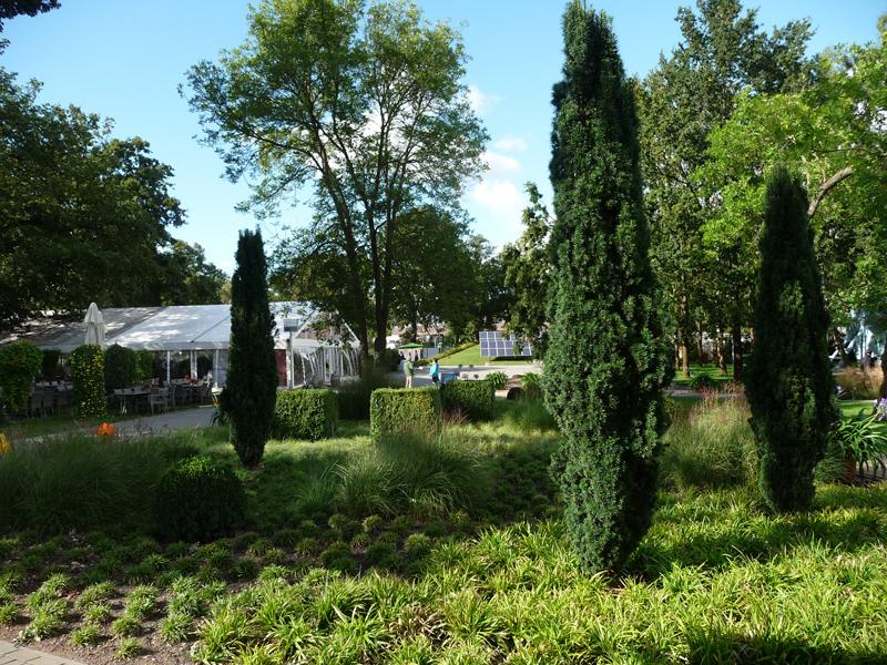Bepflanzung mit Säuleneibe