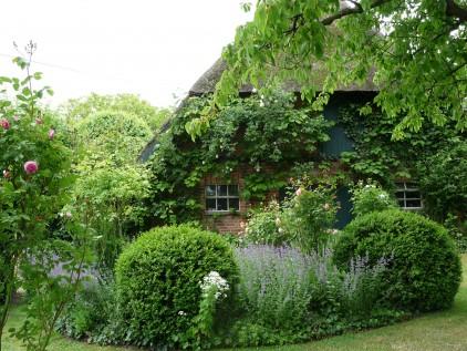 Online-Workshops Gartenplanung