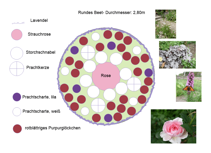 Pflanzplan rundes Beet mit Rose