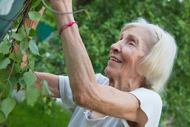 Gärten für Senioren Alte Frau pflückt etwas