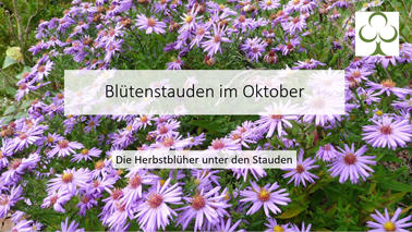 Video Blütenstauden im Oktober