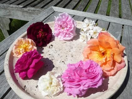 Grundkurs Gartentherapie Rosenblüten auf einem Teller