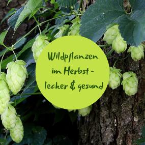 Webinar Wildpflanzen im Herbst