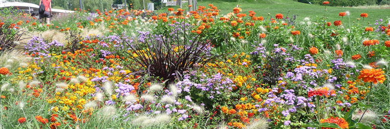 Beetformen Bodenbeet mit bunten Blumenn