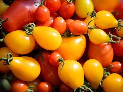 yellow-tomatoes-1671327_640