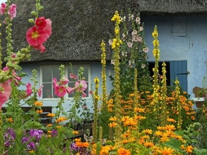 Vorgarten gestalten mit bunten Blumen