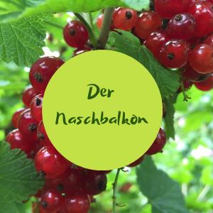 Online-Workshop - Naschbalkon