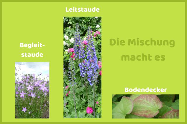 Pflegleichter Garten_Staudenmix
